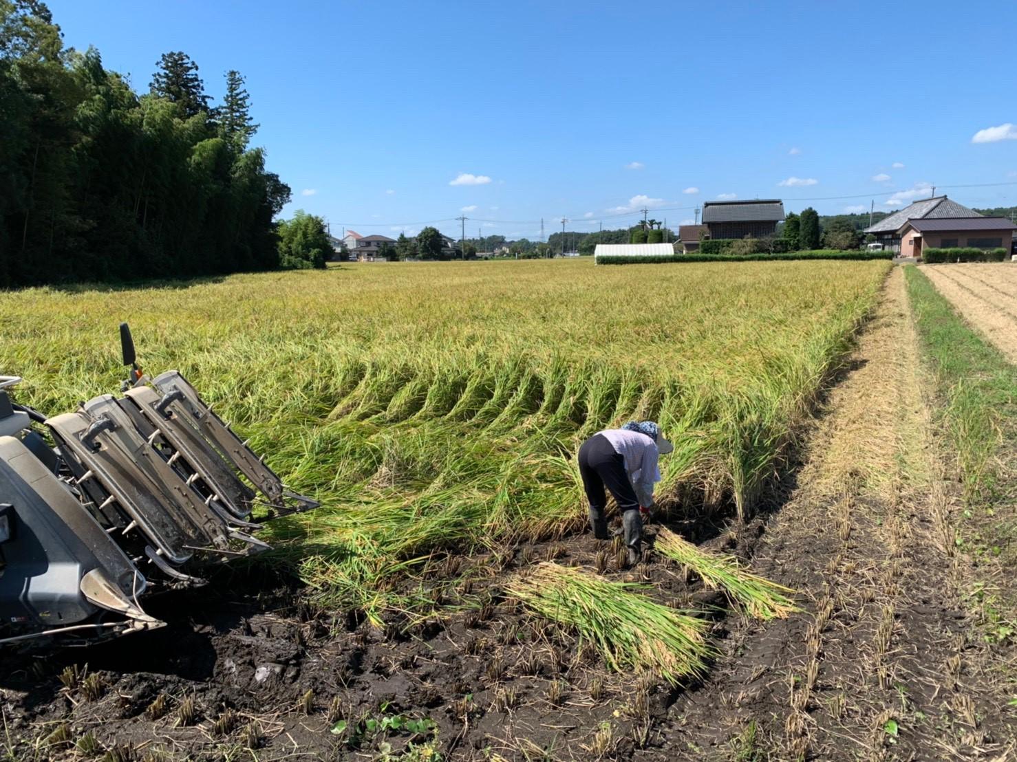 グリーンウインド稲刈り